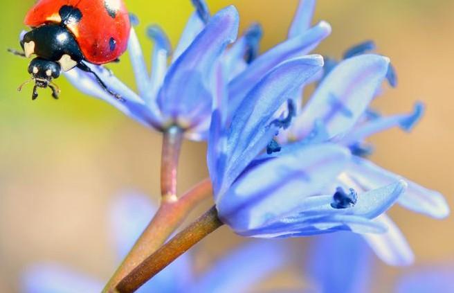 Fleurissement_2015_Concours_Photo