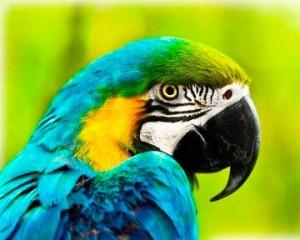 Perroquet-detenteurs-oiseaux