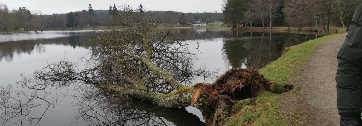20210219_arbre-ponty